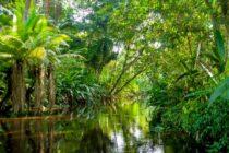 America Easy Amazonia 3